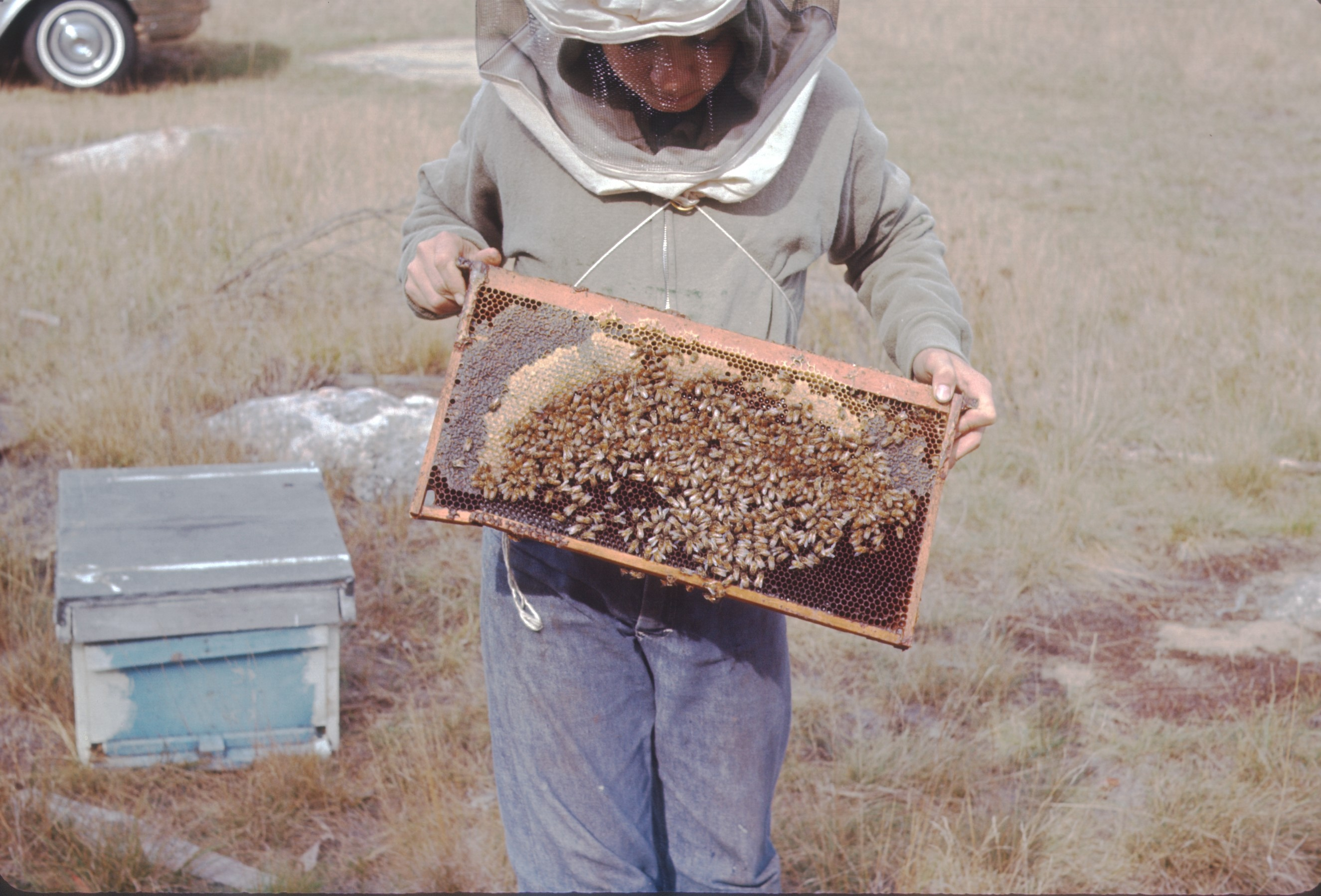 Beekeepers and Honey Farmers in Massachusetts, New York and Louisana